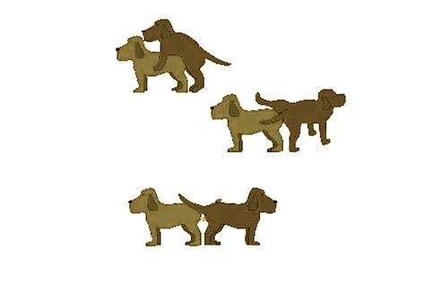 perros apareamiento notas sobre la reproducci 243 n en los perros 171 zoolog 237 a y ciencia