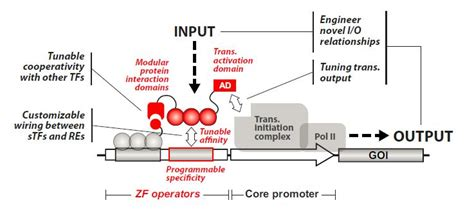 integrated gene circuits synthetic biology integrated gene circuits 28 images figure 2 synthetic biology
