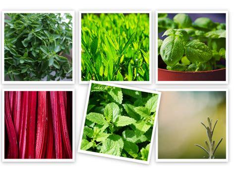 crea il tuo giardino crea il tuo giardino segreto floraqueen