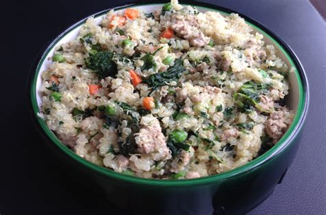 can dogs quinoa quinoa food recipe