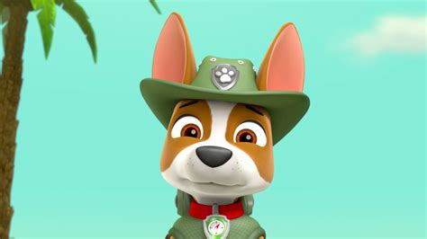 what of is tracker from paw patrol image paw patrol 315 94 tracker png paw patrol wiki fandom powered by wikia