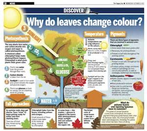 why leaves change color how why do leaves change color brown hairs