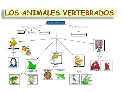 los animales vertebrados vertebrados