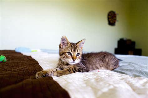 reiki energy   cats catster