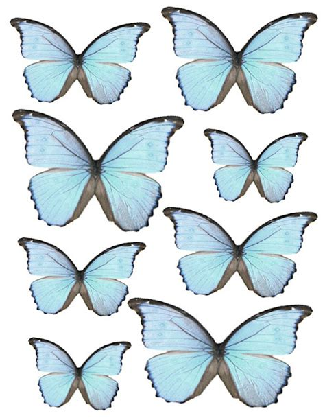 printable images of butterflies printable butterflies what a beautiful mess