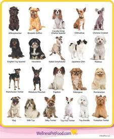 dogs types types of breeds breeds breeds breeds and
