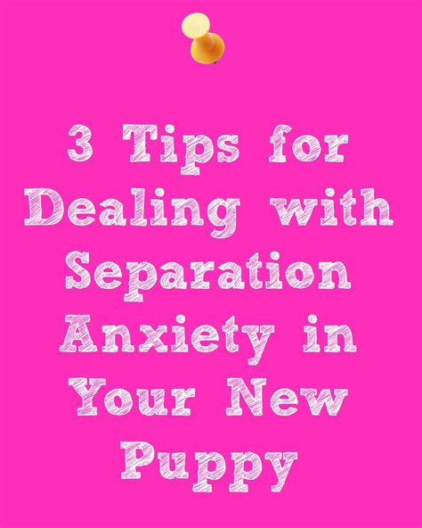 how to deal with puppy separation anxiety separation anxiety in your new puppy
