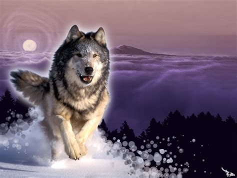 Wolf L by Wolves Wolves Wallpaper 10291309 Fanpop