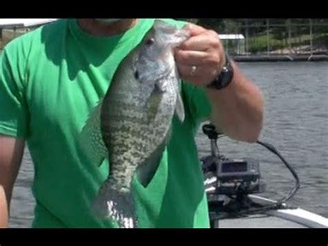 fish brushpiles fishing tips   catching