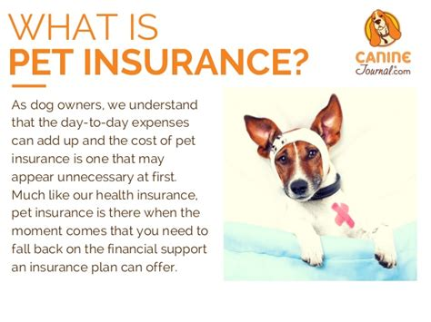 puppy insurance pet insurance reviews