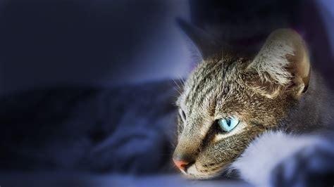 rollmatratze wie lange liegen lassen wie lange kann katzen alleine lassen