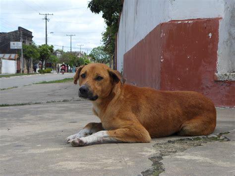 imagenes animales en perros de la calle taringa