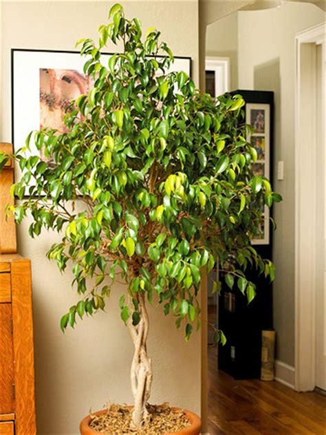 best low light indoor trees plants
