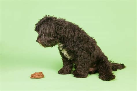 what to do when a dog poops in the house help my dog poops a lot how much is too much