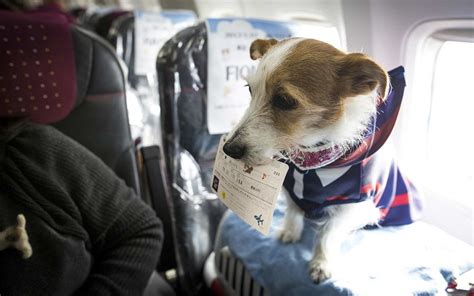Book Your Travel To Dreamland Pet Pet Pet Product by This Friendly Airline Is An Animal Lover S Come
