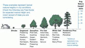 Tree Canopy Size Chart by Sizing Guide