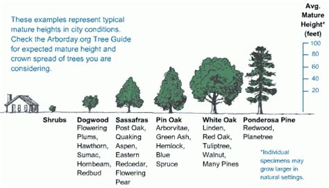 fruit tree spacing chart sizing guide