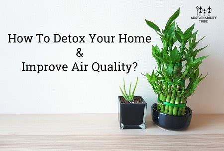 how to detox your home improve indoor air quality