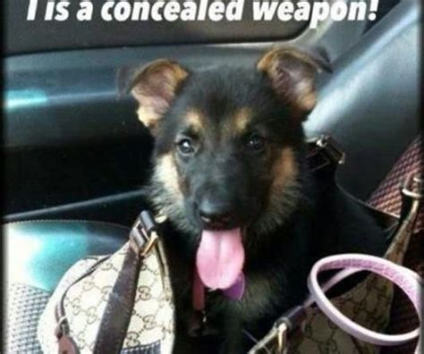 puppy weapon weapon humor