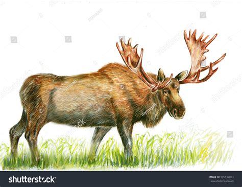 animals animals drawing stock illustration 105132833