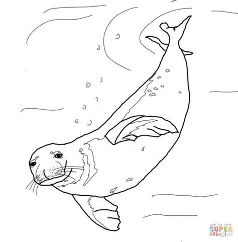 fotos de lobos marinos  pintar colorear imagenes