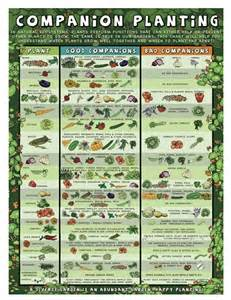 herb planting chart 17 best images about companion planting on pinterest