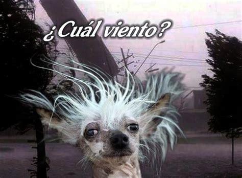 imagenes graciosas viento estilodf 187 crean memes tras el fuerte viento que