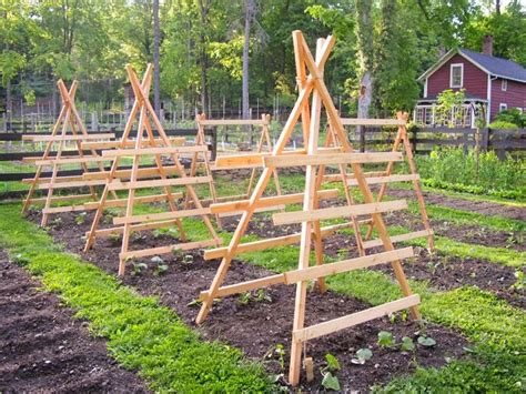 Ready Made Trellis All Stuff The Edible Garden