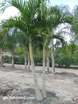 collection of christmas palm trees for sale best