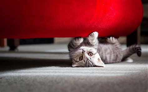 cute  cat wallpapers hd wallpapers id