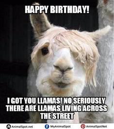 Llama Birthday Meme - llama memes