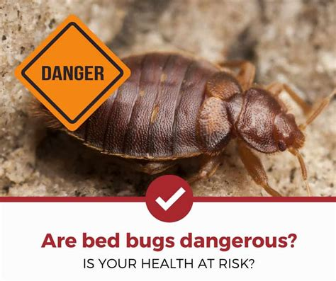 are bed bugs harmful are bed bugs dangerous 3 things you should know pest