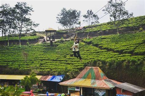 Teh Jawa Cafe keindahan wisata alam kebun teh kaligua bumiayu jawa tengah