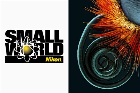 nikon small nikon small world 2016 winners digital photography live