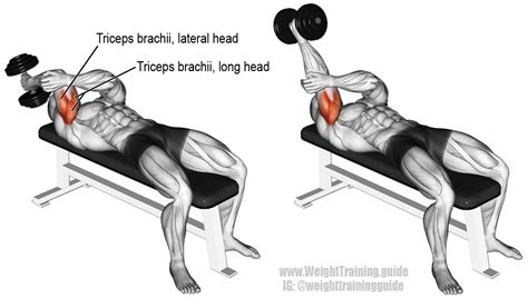 lying tricep cable extension flat bench lying one arm dumbbell triceps extension instructions and video