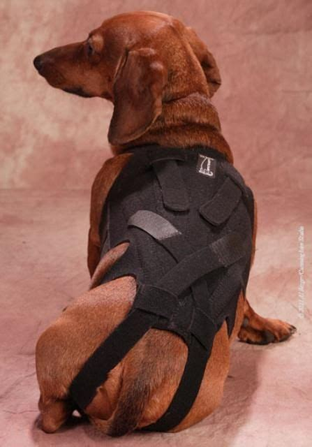 dogs with spine lil back bracer comfortable adjustable support for dogs with back easy to do