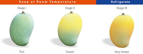 what color is a ripe mango savanifarms mango ripening storing