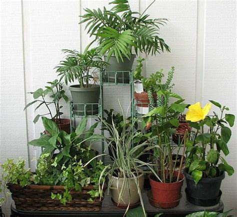 indoor flower garden indoor gardening indoor plants flower garden