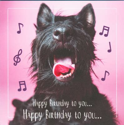 dogs singing happy birthday arooing scottie singing happy birthday card