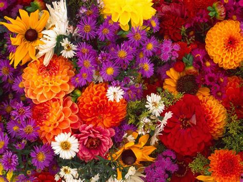 fall flowers hd wallpapers download flowers hd wallpapers download 1080p