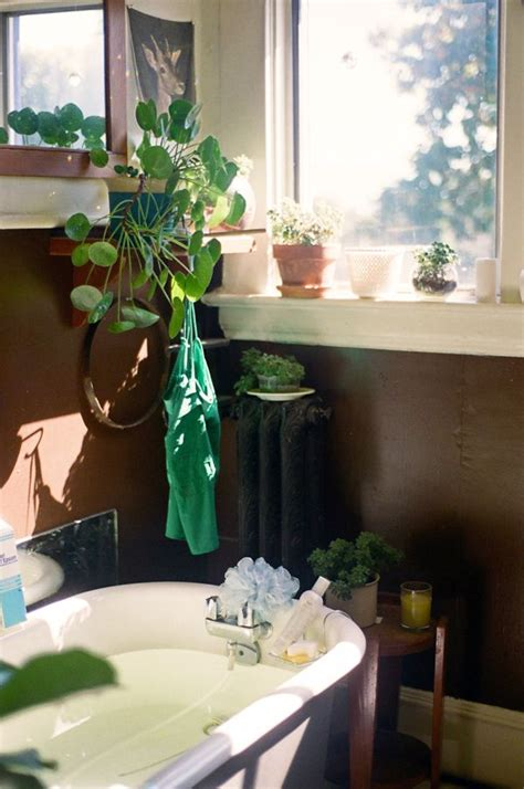 best plant for bathroom with no window 197 best images about pannenkoekenplant pilea