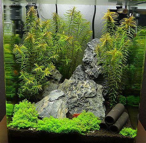 aquascaping shop 220 ber 1 000 ideen zu aquarienfische auf pinterest