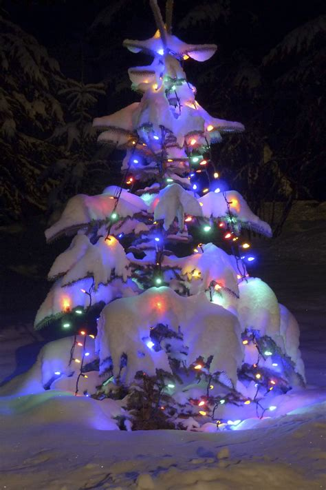 free images winter glowing natural holiday colorful