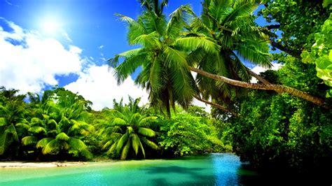 tropical nature 4k wallpaper free 4k wallpaper