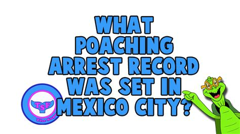 Mexico Arrest Records What Poaching Arrest Record Was Set In Mexico City The Fins