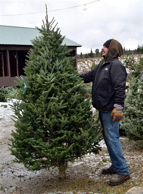 christmas tree farm utah ogden tree crisis not news sports adirondack daily enterprise