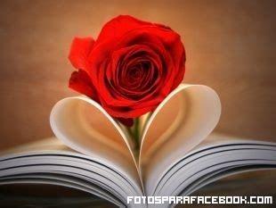 libro the rose rosa en el libro