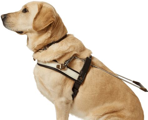 puppy guide guide access guide dogs