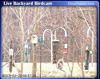 live backyard birdcam download
