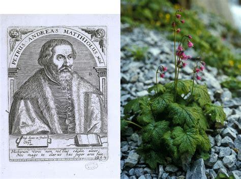 Pflanzen Im Bestellen 1544 by Infomed Bild Des Monats Pietro Andrea